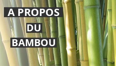 A PROPOS DU BAMBOU